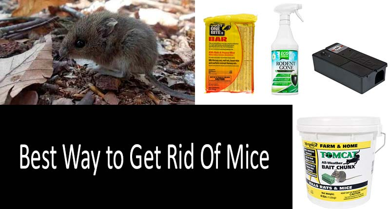 ✅ Best Way to Get Rid of Mice: the best mouse killers and traps