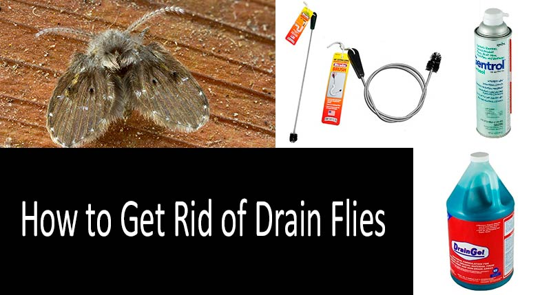 how to get rid of drain flies: photo
