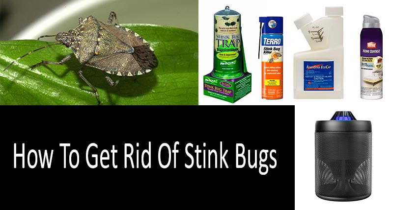 how to get rid of stink bugs 7 stink bug sprays traps and killers. Black Bedroom Furniture Sets. Home Design Ideas