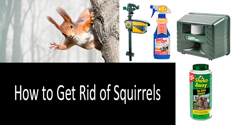how to get rid of squirrels: photo