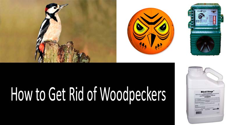How to Get Rid of Woodpeckers: view more