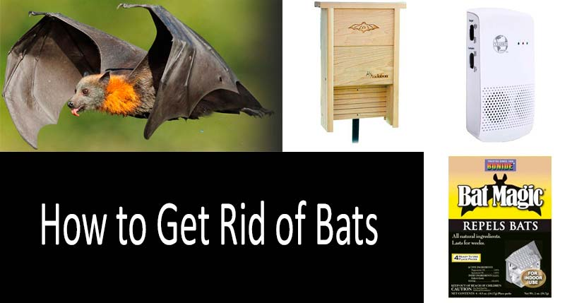 How to Get Rid of Bats: Best Repellents and Ways - 2019