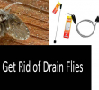 How to Get Rid of Drain Flies: Best Ways to Eliminate Flies from Your Life