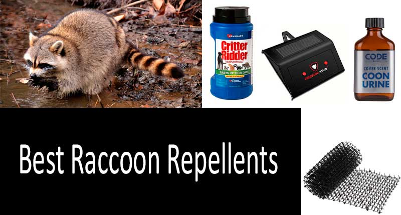 Best Raccoon Repellents: photo