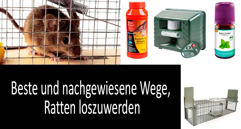 Wie man Ratten loswerden kann: photo