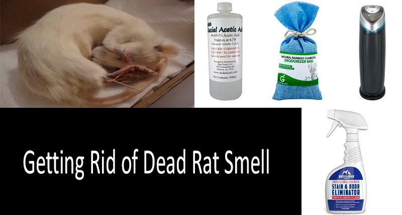 how to get rid of dead rat smell effectively. Black Bedroom Furniture Sets. Home Design Ideas