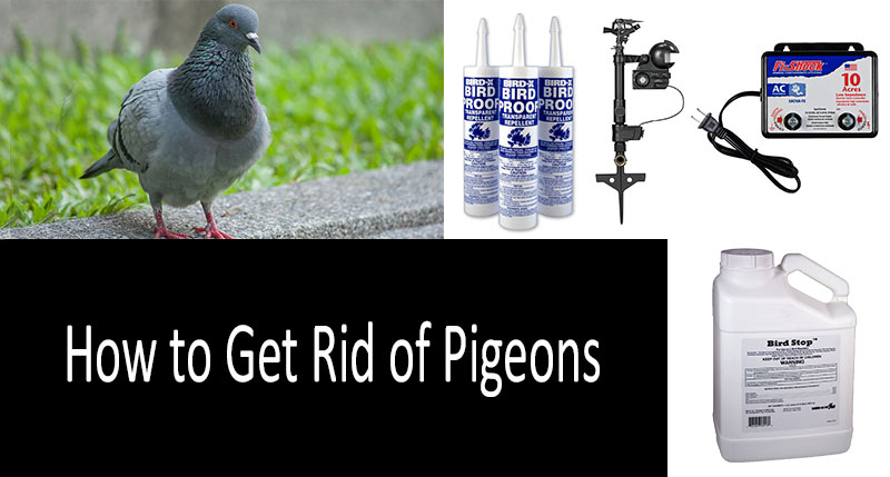 How To Get Rid Of Pigeons Top 8 Pigeon Repellents And