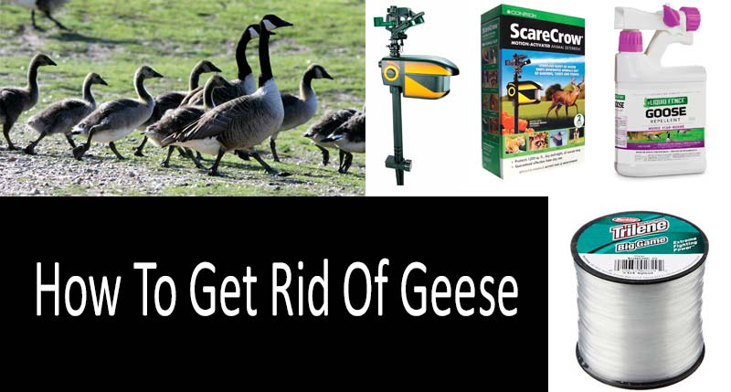 How To Get Rid Of Geese: view more