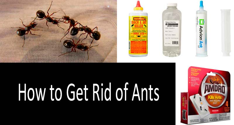 How to Get Rid of Ants: 6 effective strategies and 17 ant control products