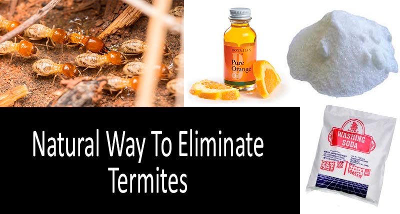 How to get rid of termites naturally: view more