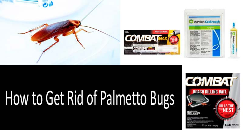 how to get rid of palmetto bugs?: photo