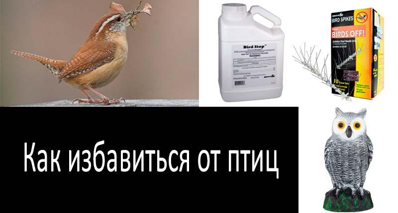 Как избавиться от птиц: смотреть подробнее