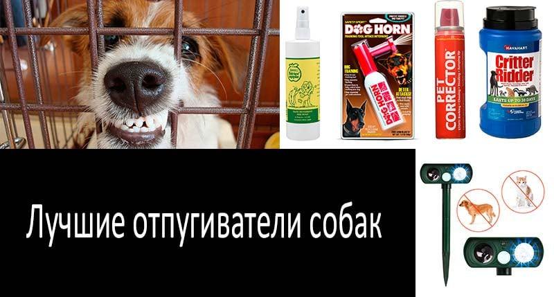 TОП-10 репеллентов от собак для защиты себя и своего двора