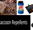 Best Raccoon Repellents and Deterrents Effectiveness