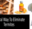 Natural Way To Eliminate Termites with Use of Nature's Wisdom Orange Oil