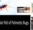 Palmetto bugs: how to get rid of these pesky creepers for good?