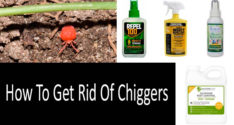 How To Get Rid Of Chiggers: photo