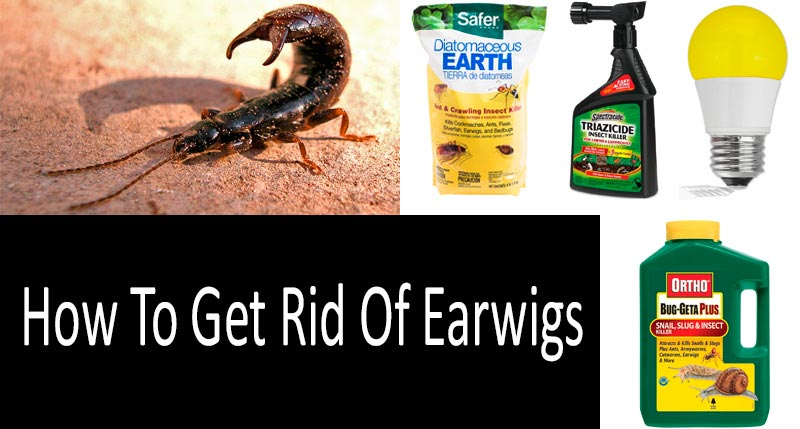 How To Get Rid Of Earwigs: photo