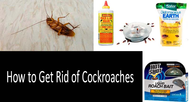 How to get rid of cockroaches: TOP-10 Roach Control Products