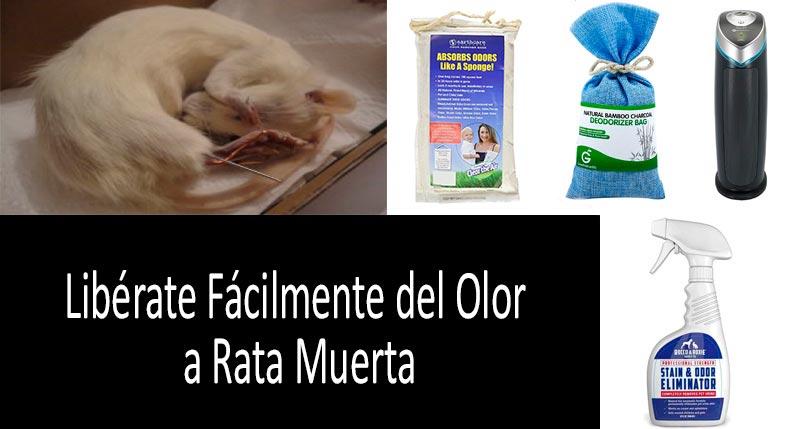 cómo librarte del olor a rata muerta: ver más