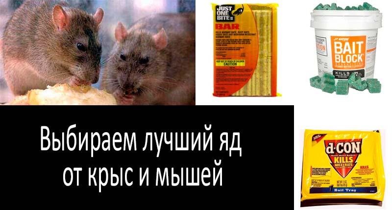 лучший яд от крыс и мышей: смотреть подробнее