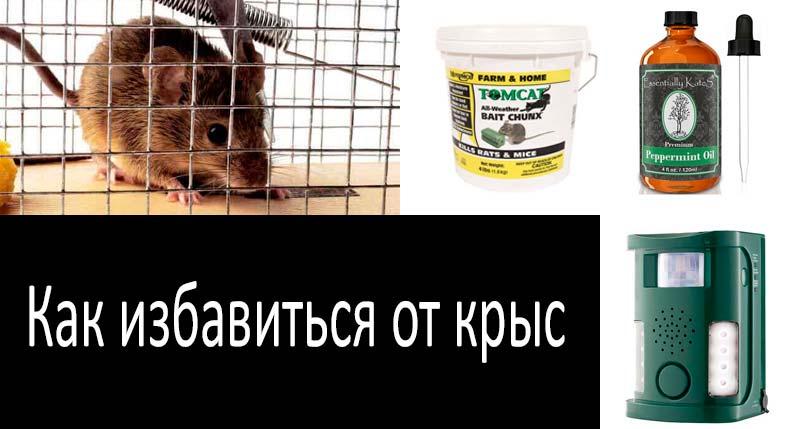 Как избавиться от крыс: смотреть подробнее