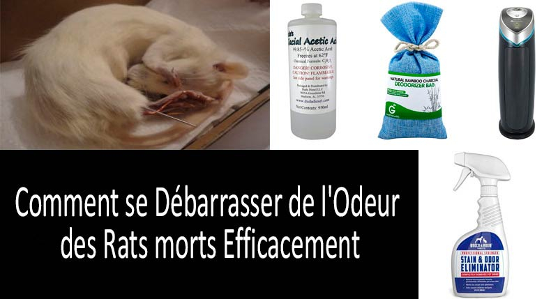 Comment se Du00e9barrasser de l'Odeur des Rats morts: photo