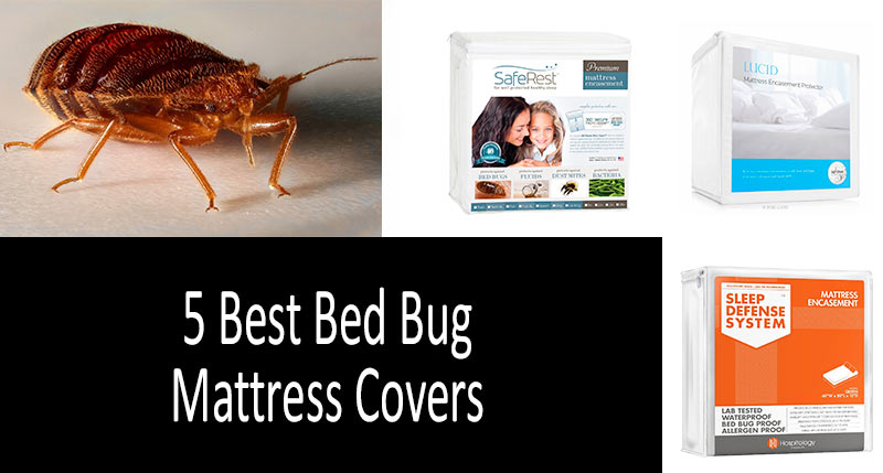 5 Best Bed Bug Mattress Covers: photo