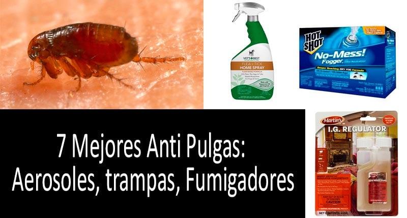 Cu00f3mo eliminar pulgas: foto