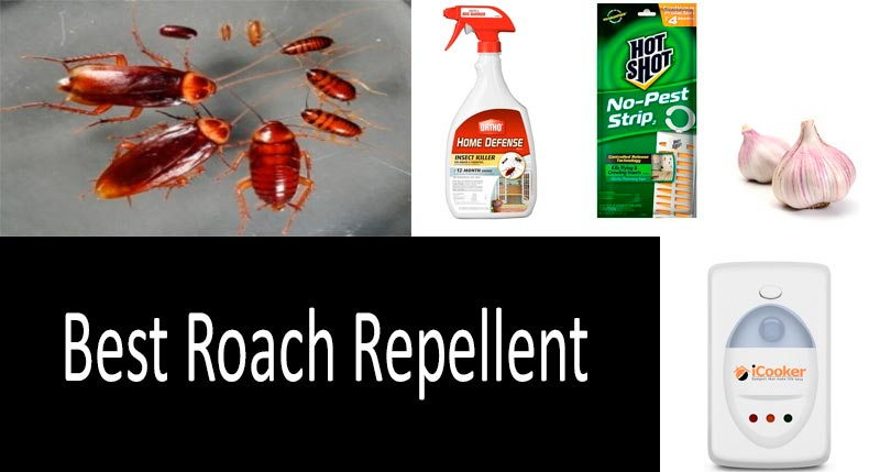 the best cockroach repellent: photo