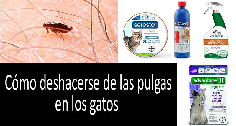 Cómo deshacerse de las pulgas en los gatos: ver más