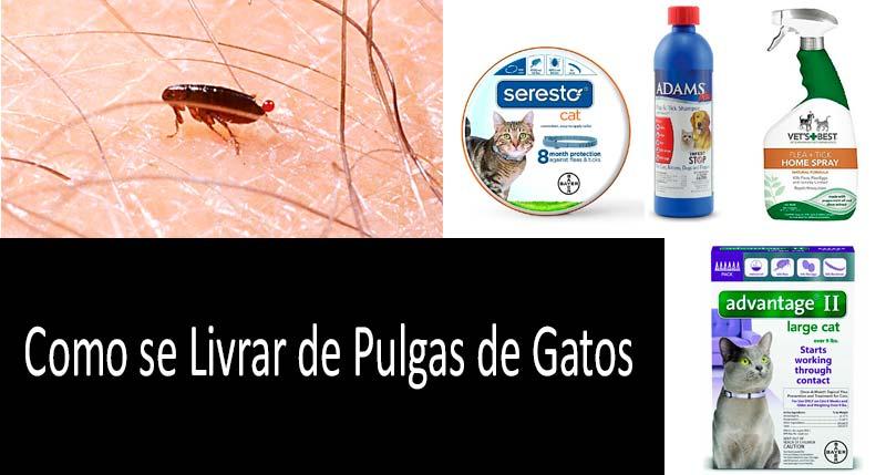 Como se livrar das pulgas em um gato: Veja mais