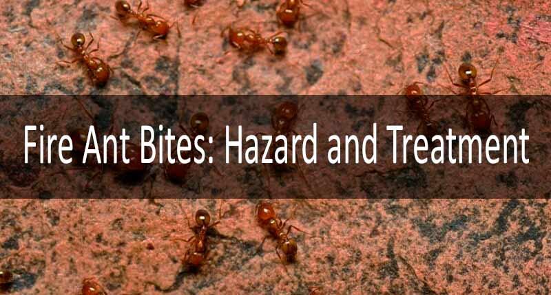 Fire ants bites
