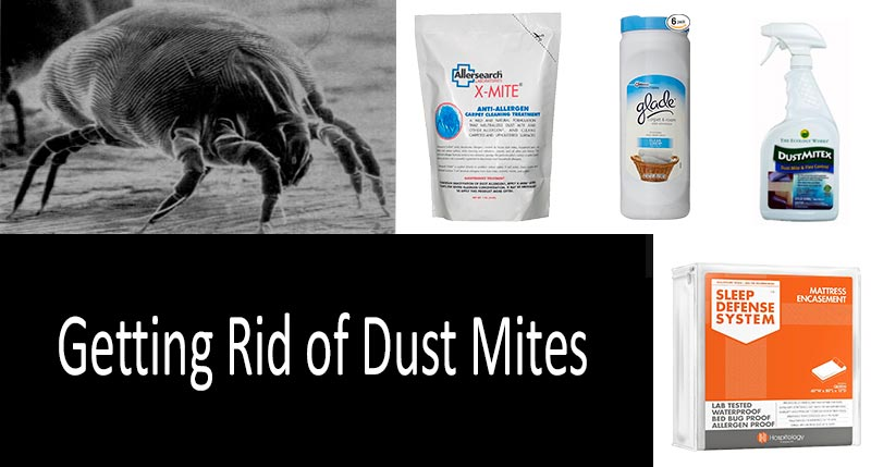 how to get rid of dust mites: photo