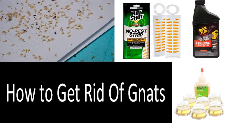 how to get rid of gnats: photo