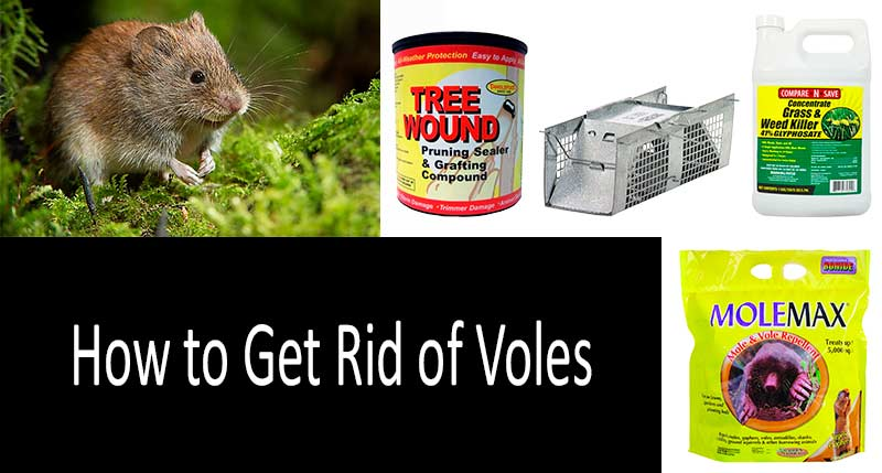 how to get rid of voles photo