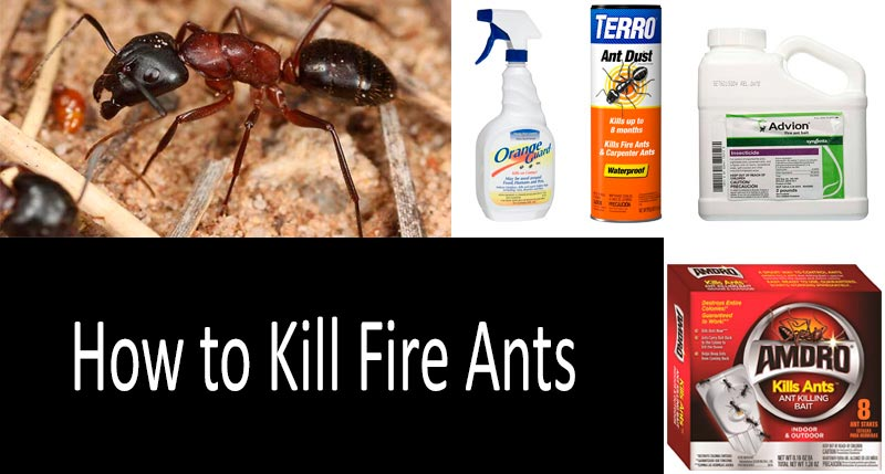 best fire ant killers: view more