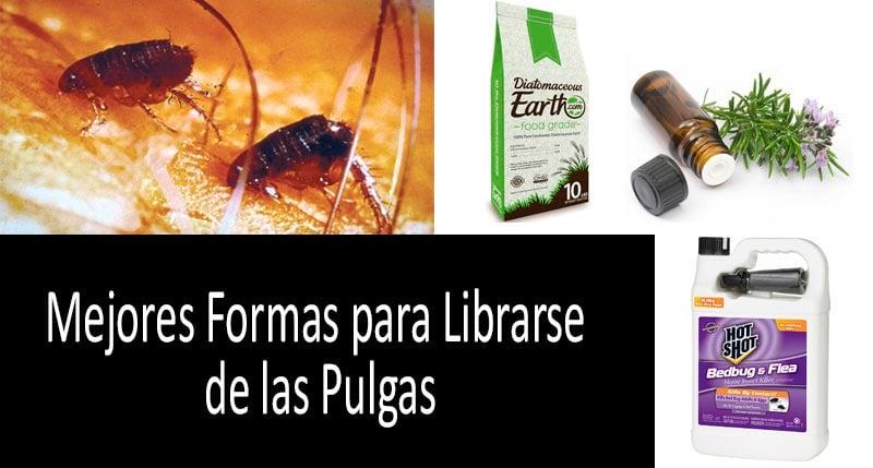 Librarse de las Pulgas: foto