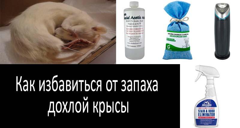 Избавляемся от запаха дохлой крысы: смотреть подробнее