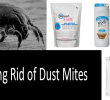 5 best air purifiers for dust mite allergy. Black Bedroom Furniture Sets. Home Design Ideas