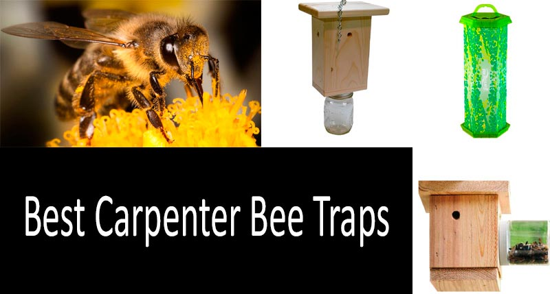 Best Carpenter Bee Traps: photo