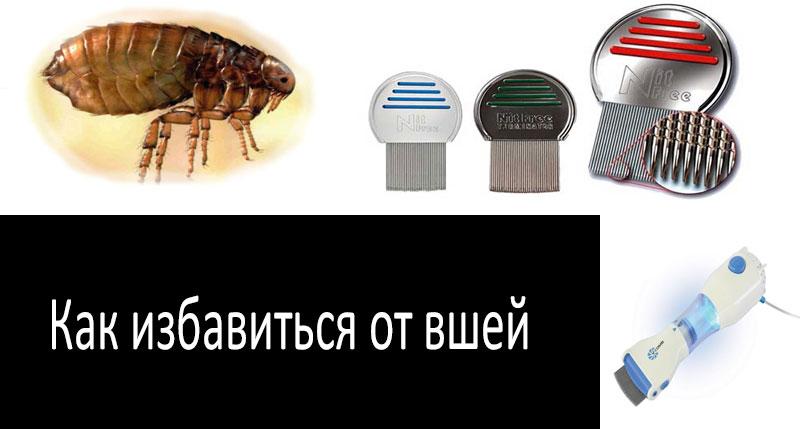 Как выглядят вши и гниды у человека: фото и описание паразитов и их личинок при педикулезе