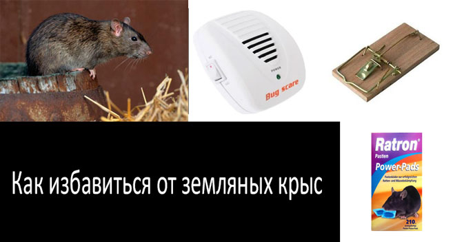 эффективные методы борьбы с земляными крысами: смотреть подробнее