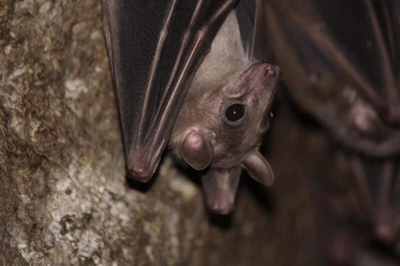 Как избавиться от летучих мышей: смотреть подробнее