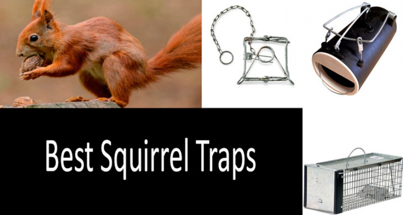 Top 8 Best Squirrel Traps & Baits Recommended by Scientists [UPDATED 2019] Buyer's Guide