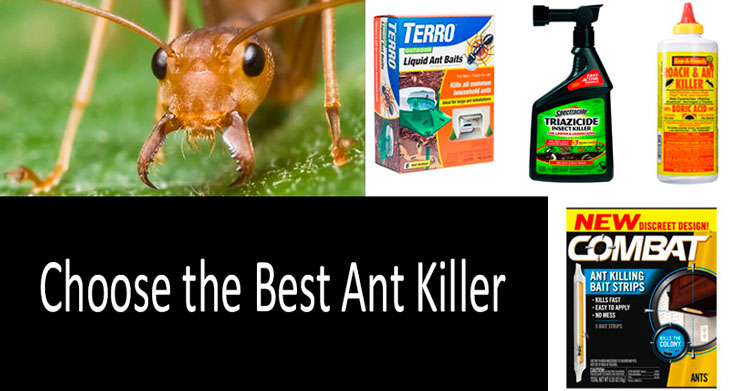 Choose the Best Ant Killer. What is More Effective?