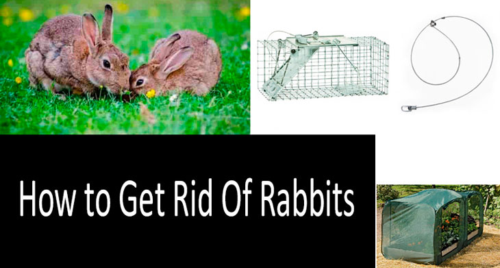 How to Get Rid of Rabbits Both in Winter and in Summer: 7 Best