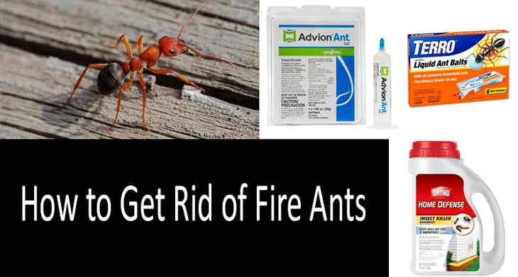 How to Get Rid of Fire Ants | Choosing the Best Way in 2019