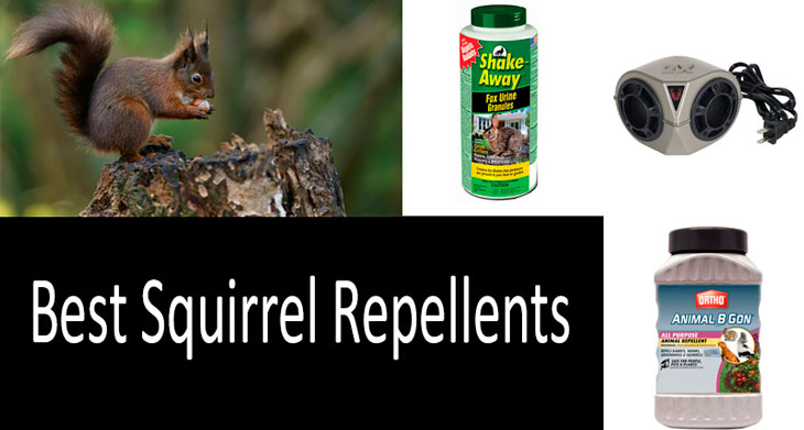 Best squirrel repellents worth buying: photo