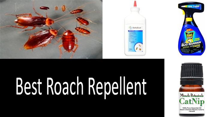 the best cockroach repellent: photo